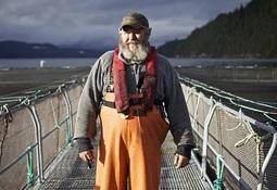 Temen pérdidas de empleo en la industria del salmón canadiense