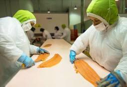 Trabajadores de dos salmonicultoras harán paro de actividades