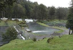 Científicos encuentran genes de resistencia asociados a pisciculturas de río