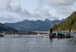Canada moves forward with BC transition from net pens