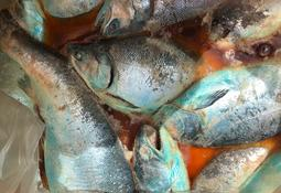En Quellón: Trabajadores del salmón advierten grave contingencia sanitaria