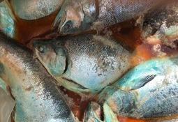 Fisk råtner nå i de chilenske prosessanleggene