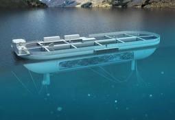 Entregan permisos para el desarrollo de piscina flotante de salmón