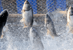 US nutrition supplier buys fish feed producer
