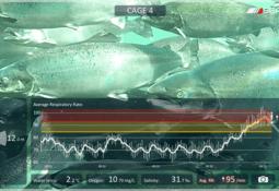 Lanzarán tecnología para detectar el estrés en salmones