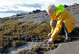 Ocean warming assessment illustrates climate challenge facing salmon farming