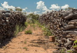 Grieg, Nutreco and Tesco stump up to save forests