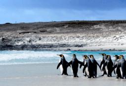 Analizan potencial de actividad acuícola en Islas Malvinas