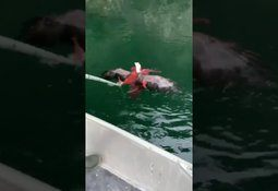 Fish farmers save eagle from octopus