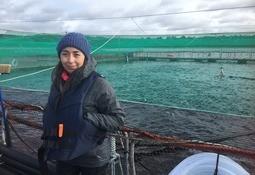 Auditora independiente detalla desafíos para certificar al salmón chileno