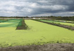 Peat bog fish farm does the spadework for sustainability