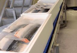 Slutt for eksport av oppdrettsfisk med feil og mangler