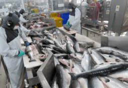 Energy switch cuts salmon producer's emissions by 8%