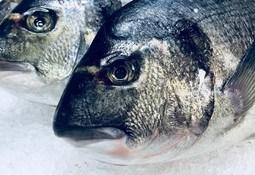 Turkey's aquaculture exports top $1 billion