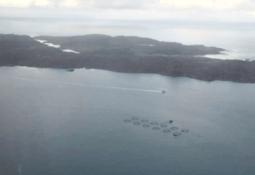 Nuevo escape de salmones en centro de Mowi Escocia
