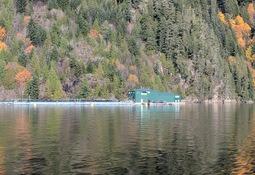 Trees might help reduce harmful algal blooms