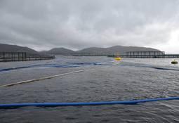 Noruega: 290 mil salmones escaparon en 2019