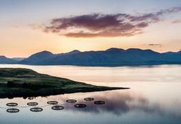 Aquaculture innovators offered share of £2.9m research cash
