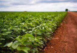 Norsk laks kan få mindre fotavtrykk etter nye CO2-tall for brasiliansk soya