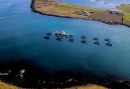 Cooke Aquaculture destaca importancia de comercializar salmón sin problemas a UE