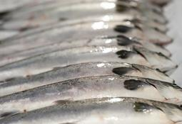 Norway's first RAS-grown salmon on sale soon