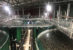 Nye investeringer i Norcod baner vei for revitalisert torskeoppdrett