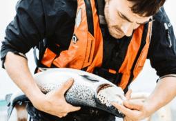 Scottish Sea Farms' earnings take hit in Q4