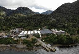 Proveedores salmonicultores de Aysén incorporan la innovación en sus procesos