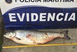 Formalizan a tres individuos por robo de 17 toneladas de salmón