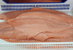 Covid issues push Chilean salmon to record weight
