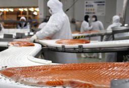 Estados Unidos impulsa envíos de salmón desde Los Lagos
