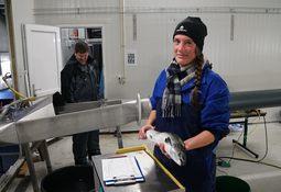 Nye grep fører til mye kortere tid for laksen i sjø
