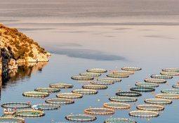Bill Gates invierte en negocio de la acuicultura en Grecia