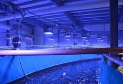 Así opera la instalación que venderá el primer salmón RAS de Noruega