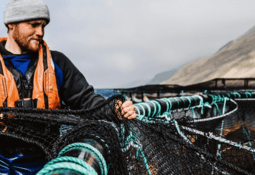 Profit and volume up in Q1 for Scottish Sea Farms