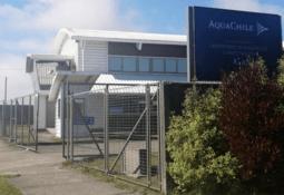 Chilensk lakseprodusent skal analysere koronaprøver