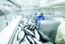 Norway driving hard to keep seafood exports moving