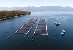 Piden endurecer control para trabajadores acuícolas que ingresan a Aysén