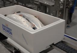Bakkafrost harvests 18,000 tonnes in Q1