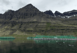Icelandic salmon farmer bids to fund huge expansion