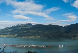 Subpesca resuelve no entregar más concesiones acuícolas en Los Lagos y Aysén