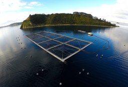 WWF Chile: Se sigue necesitando una moratoria de concesiones acuícolas