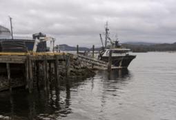 Salmonicultora reporta derrame de aguas residuales de planta en Canadá