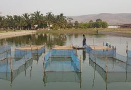 World aquaculture 'must include the poor'