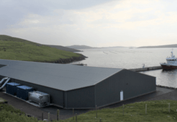 Robust smolts boost Grieg Shetland survival rate