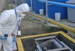 Investigan a procesadora de salmón por vertimiento de efluentes líquidos