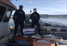 Armada incauta más de 3 toneladas de salmones robados en Quemchi