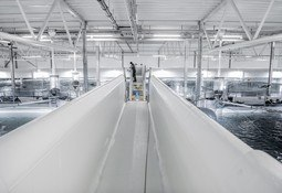 Pengene er sikret, nå kan satsingen på laks på land i Kina starte