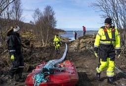 Instalan cable de siete kilómetros para megaproyecto salmonicultor Havfarm