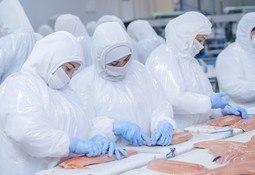 Desbloquean planta chilena para exportaciones de salmón a Rusia